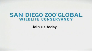 San Diego Zoo Global Wildlife Conservancy TV Spot - Thumbnail 10