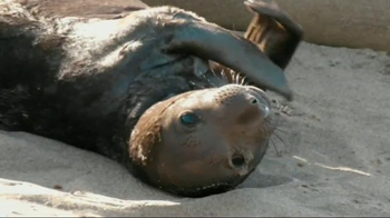 San Diego Zoo Global Wildlife Conservancy TV Spot - 127 commercial airings