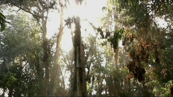 San Diego Zoo Global Wildlife Conservancy TV Spot - Thumbnail 8