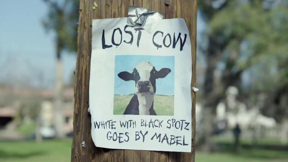 Chick-fil-A TV Commercial, 'Missing Cow' - iSpot.tv