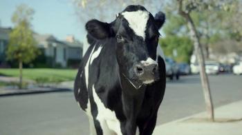 Chick-fil-A TV Spot, 'Missing Cow' - Thumbnail 5