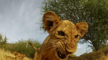 GoPro TV Spot, 'Lion Cub Roar'