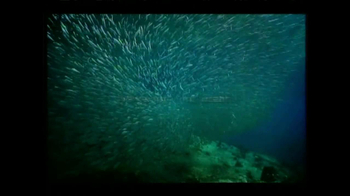 World Wildlife Fund TV Spot Featuring Counting Crows Song - Thumbnail 4