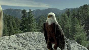 iD Gum TV Spot, 'Bald Eagles with Hair' - Thumbnail 5