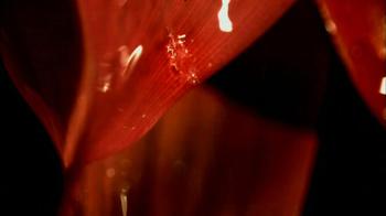 CSX TV Spot, 'Fireworks' - Thumbnail 3