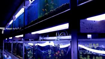 Velveeta TV Spot, 'Tropical Fish' - Thumbnail 6
