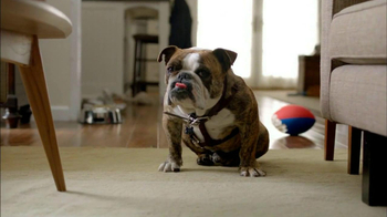 2013 Volkswagen Jetta TV Spot, 'Bulldog' Dirty Old Egg-Sucking Dog Song - Thumbnail 2