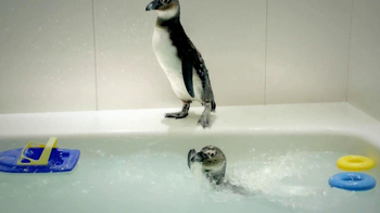 Residence Inn TV Spot, 'Penguins' - Thumbnail 4