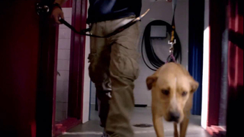 Pedigree TV Spot, 'Shelter Dogs' - Thumbnail 1