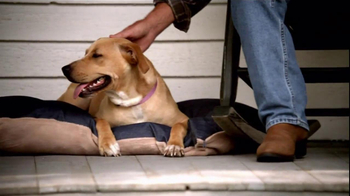 Pedigree TV Spot, 'Shelter Dogs' - Thumbnail 10