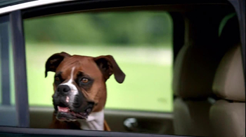 Pedigree TV Spot, 'Shelter Dogs' - Thumbnail 5