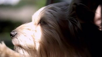 Pedigree TV Spot, 'Shelter Dogs' - Thumbnail 6