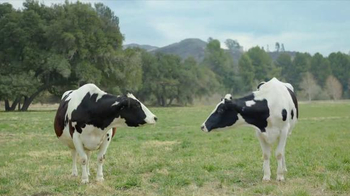 Chick-fil-A Grilled Chicken Nuggets TV Spot, 'Opportune Moment for the Cow' - Thumbnail 3
