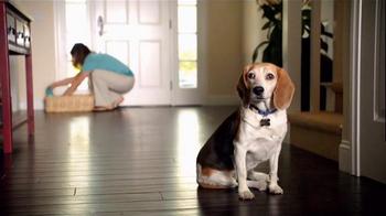 The Shelter Pet Project TV Spot, 'Toys' - Thumbnail 6