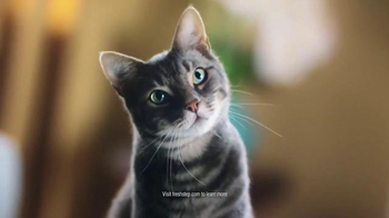 Fresh Step Extreme Lightweight Hovercat TV Spot, 'Hypnotic' - Thumbnail 5