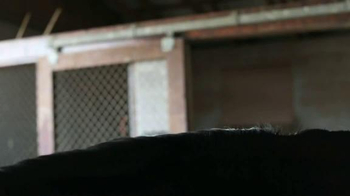 United States Equestrian Federation TV Spot - Thumbnail 2