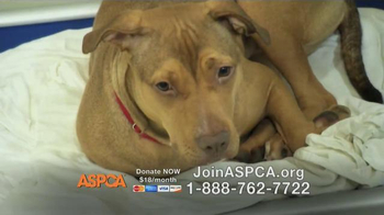 ASPCA TV Spot Featuring Eric McCormack - Thumbnail 7