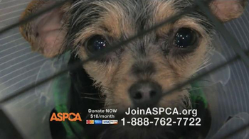 ASPCA TV Spot Featuring Eric McCormack - 1294 commercial airings