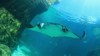 Atlantis TV Spot, 'Ultimate Summer Destination' - Thumbnail 3