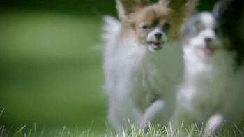 Purina Pro Plan P5 Dog Training App TV Spot, 'Animal Planet: Bella shows Pugsly' - Thumbnail 1