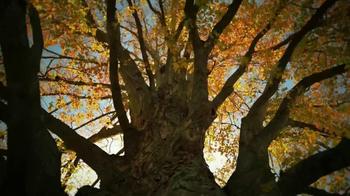 Crown Royal Maple Finished TV Spot, 'Tree' - Thumbnail 2