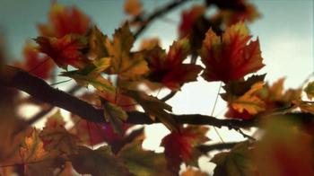 Crown Royal Maple Finished TV Spot, 'Tree' - Thumbnail 3