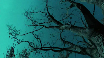 Crown Royal Maple Finished TV Spot, 'Tree' - Thumbnail 6
