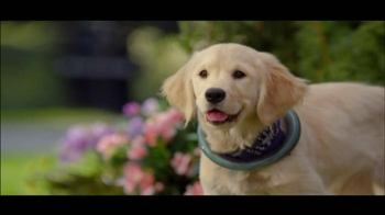 The Shelter Pet Project TV Spot, 'Puppies' - Thumbnail 2