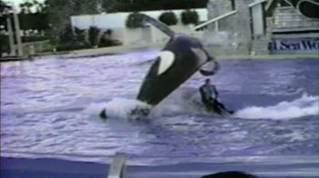 Blackfish - 33 commercial airings