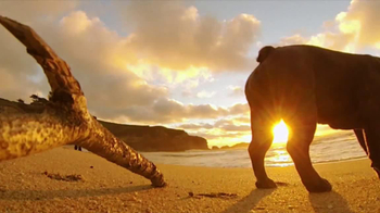 GoPro HERO3 TV Spot, 'Chicken the Dog' Song by Blackbird Blackbird - Thumbnail 8