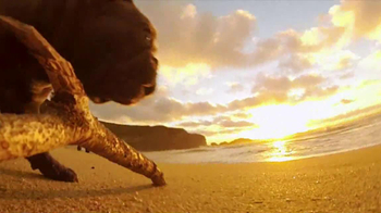 GoPro HERO3 TV Spot, 'Chicken the Dog' Song by Blackbird Blackbird - Thumbnail 7
