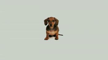 ASPCA TV Spot, 'Doggie in the Window' - Thumbnail 1