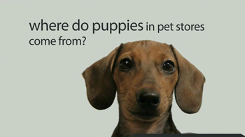 ASPCA TV Spot, 'Doggie in the Window' - Thumbnail 2