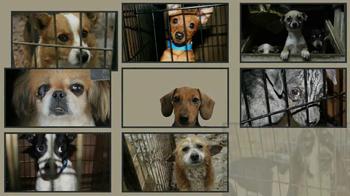 ASPCA TV Spot, 'Doggie in the Window' - Thumbnail 3