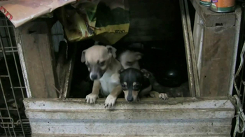 ASPCA TV Spot, 'Doggie in the Window'