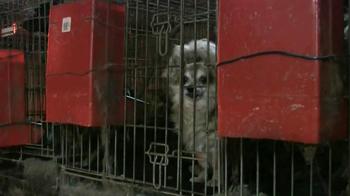 ASPCA TV Spot, 'Doggie in the Window' - Thumbnail 5