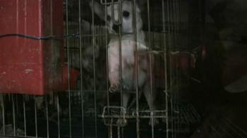 ASPCA TV Spot, 'Doggie in the Window' - Thumbnail 6