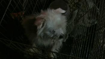 ASPCA TV Spot, 'Doggie in the Window' - Thumbnail 7