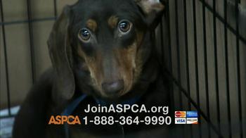 ASPCA TV Spot, 'Doggie in the Window' - Thumbnail 8