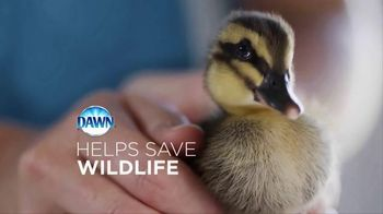 Dawn TV Spot, 'We All Love Wildlife' - 791 commercial airings