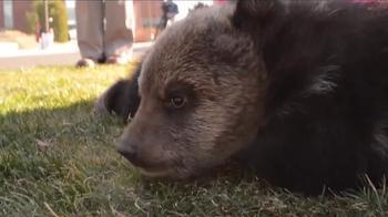 Bear Research Center thumbnail
