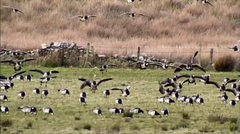Verizon TV Spot, 'Las aves' [Spanish] - Thumbnail 3