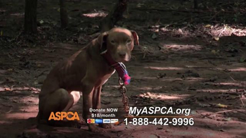 ASPCA TV Spot, 'Real and Undeniable' - Thumbnail 2