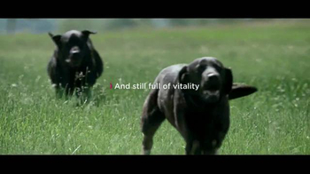 Eukanuba TV Spot, 'Dedicated to Healthier, Longer Lives'