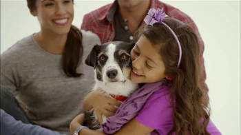 The Shelter Pet Project TV Spot, 'Comparte tu Corazón' [Spanish] - 100 commercial airings