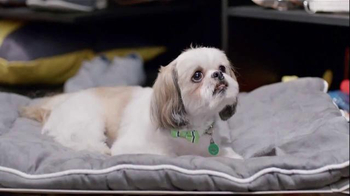 PetSmart TV Spot, 'Partners in Pethood: The Avant Guardians' - Thumbnail 4