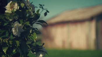 Glade TV Spot, 'What Will Glade Inspire in You?' - Thumbnail 1