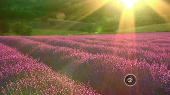 Air Wick Scented Oils Collection TV Spot, 'Heaven' - Thumbnail 8