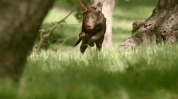 PetSmart TV Spot, 'Instinct Raw Boost' - Thumbnail 2