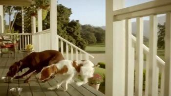 PetSmart TV Spot, 'Instinct Raw Boost' - Thumbnail 4
